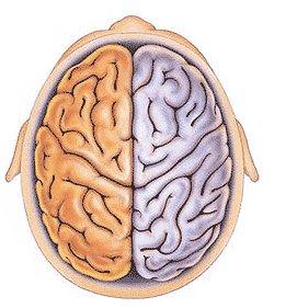 Fungsi Otak Kiri Dan Otak Kanan Manusia